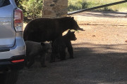 The Bears are Busy!